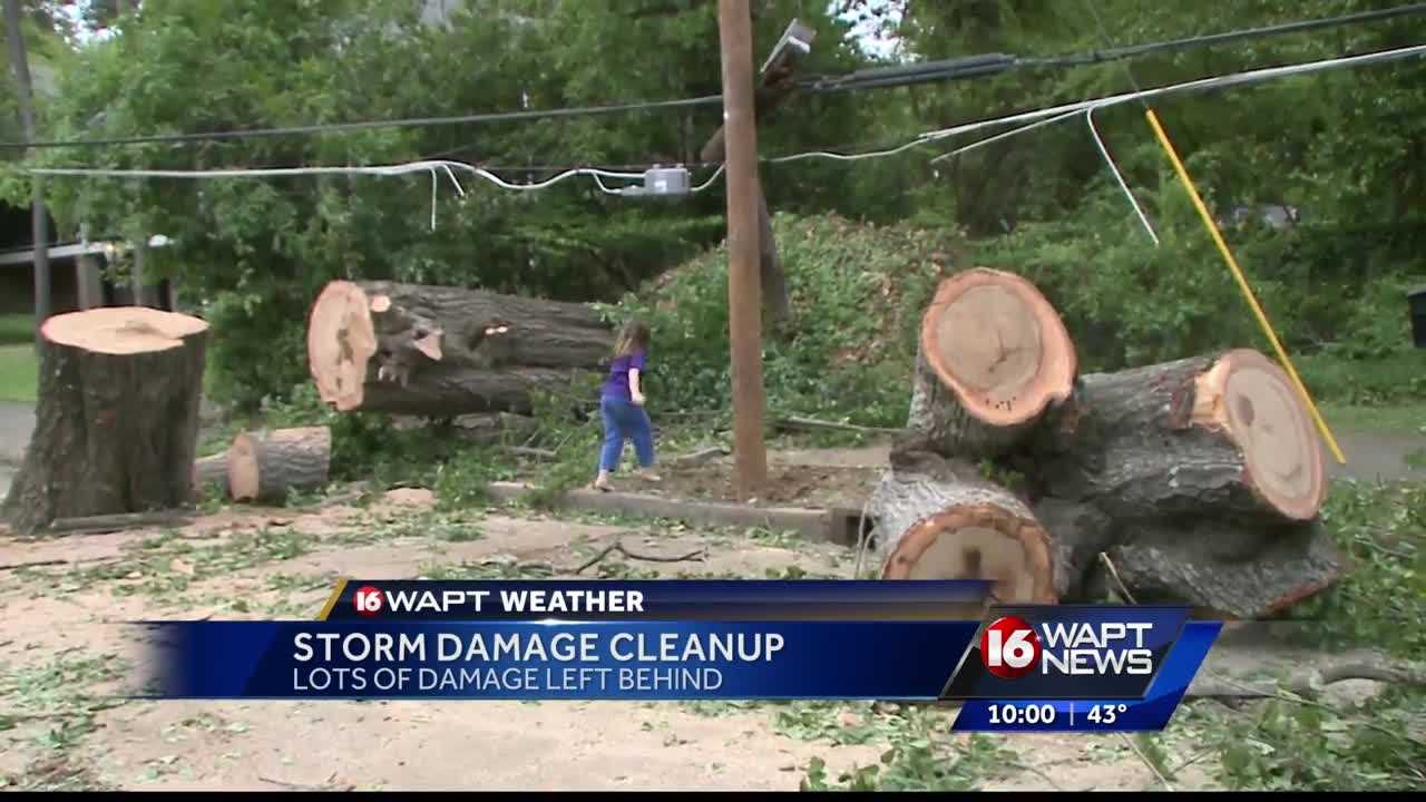 Massive tree causes damage in Belhaven