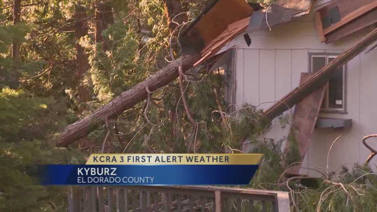 Strong winds knock several trees over