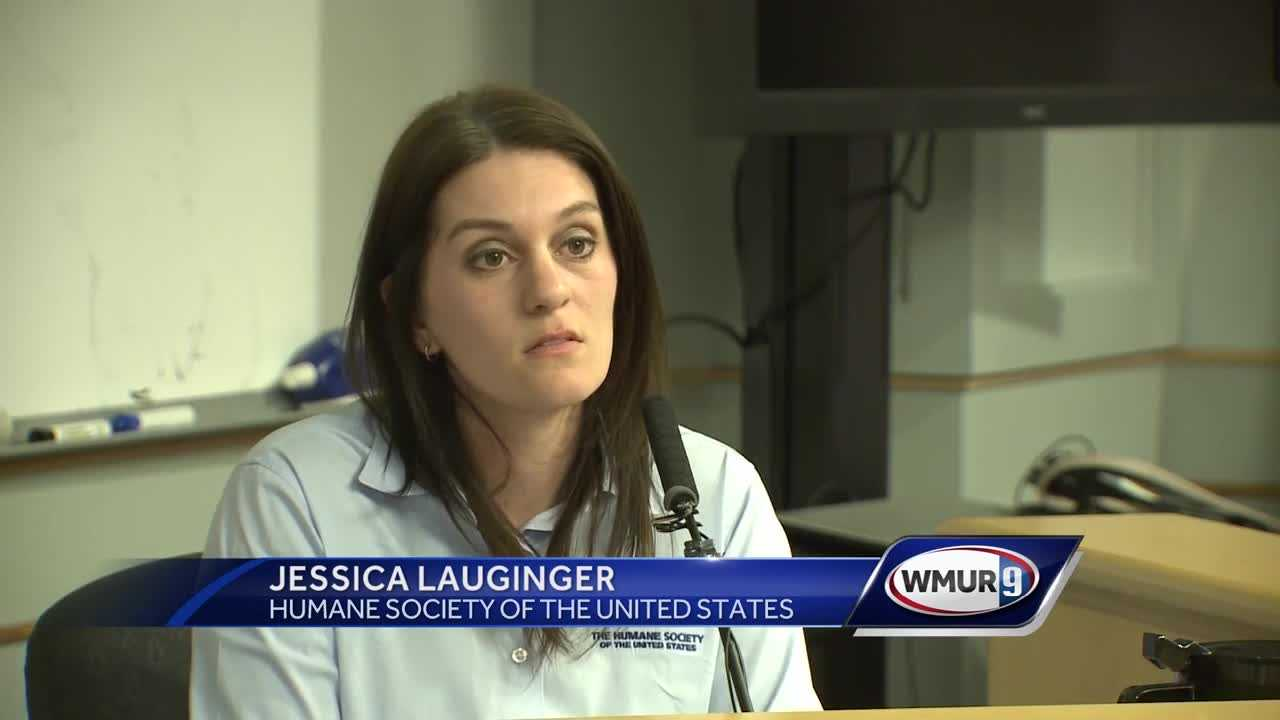 Testimony continues in Wolfeboro Great Dane abuse trial