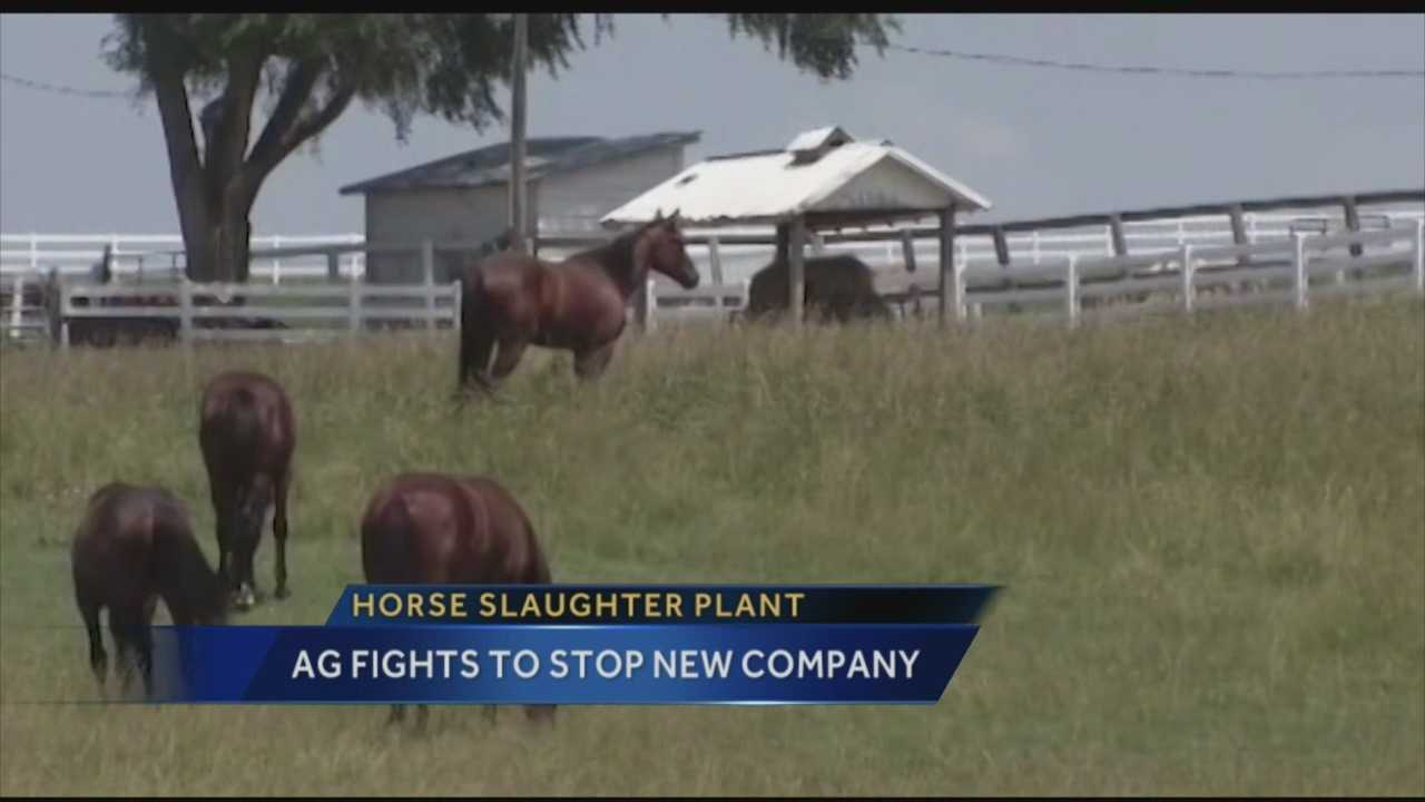 horse slaughter Horse slaughter is the shame of the entire horse industry there is no excuse for approximately one-percent of the us horse population to be killed for human consumption overseas each year.