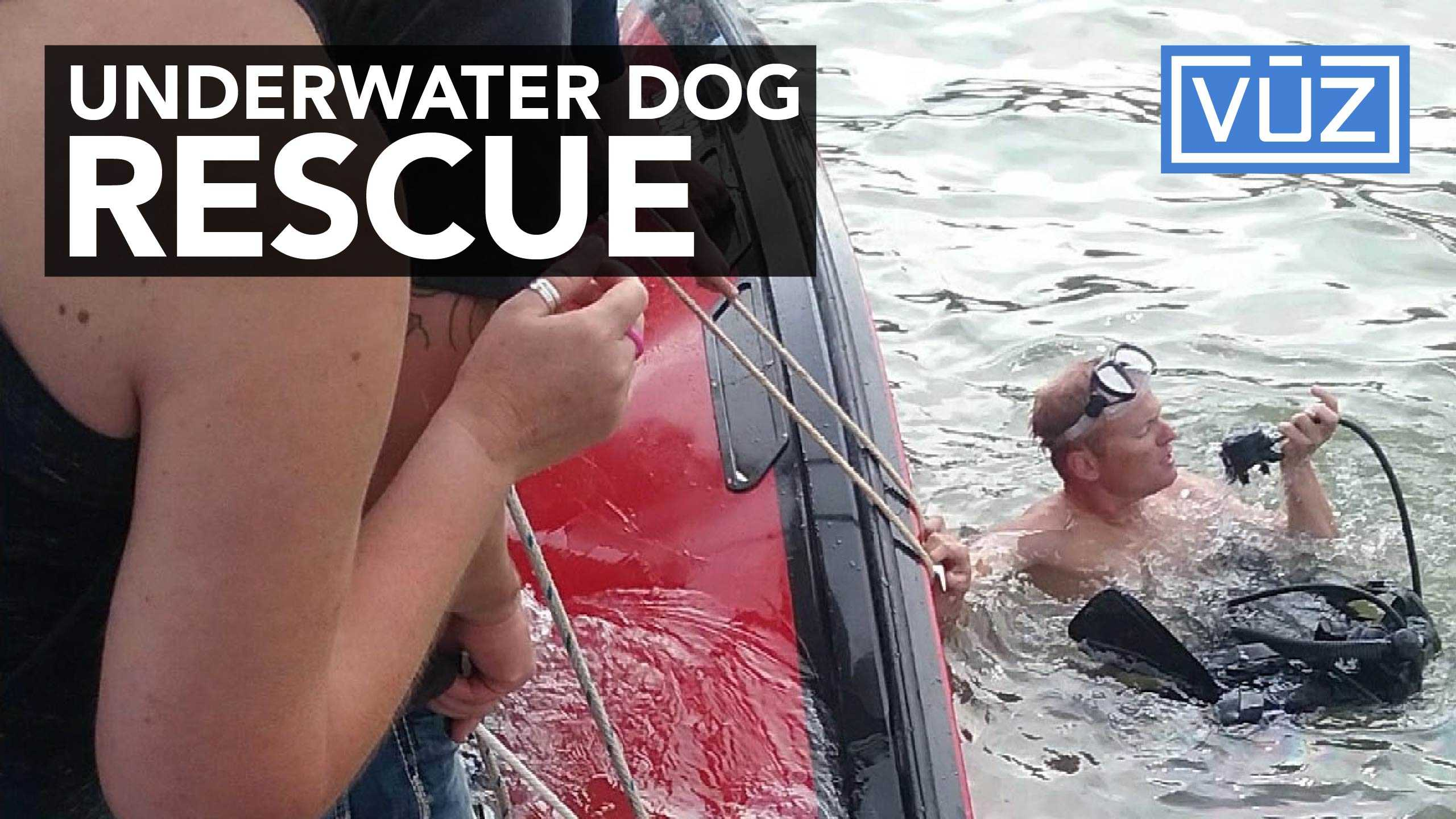 Dozens come to aid of dogs trapped in sinking boat
