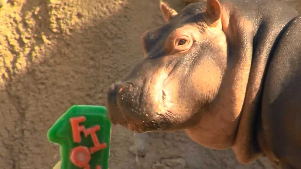 Watch Fiona Celebrates First Birthday With Her Very Own Cake