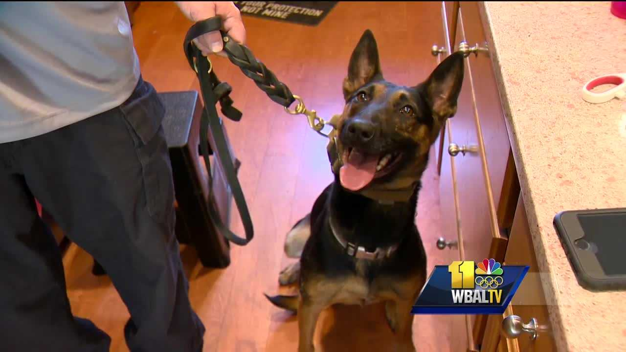 K-9 can help parents find narcotics, opioids before it's too late